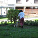 jardin-pintor-colmeiro