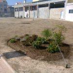 jardin-tomino