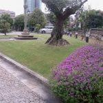 mantenimiento-jardin-fundacion-celta