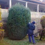 mantenimiento-jardines-2017
